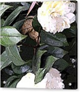 White Camellia Acrylic Print by Mindy Newman