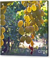 White Grapes Acrylic Print by Barbara McMahon
