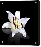 White Lily Acrylic Print by Jane Rix