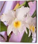 White Orchid Acrylic Print by Mike McGlothlen