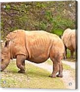 White Rhinoceros Acrylic Print by Tom Gowanlock