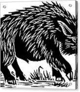 Wild Boar, Woodcut Acrylic Print by Gary Hincks