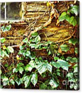 Window And Grapevines Acrylic Print by HD Connelly