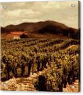 Wine Country Acrylic Print by Peter Tellone