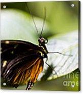 Wings Acrylic Print by Leslie Leda