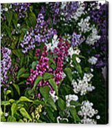 Winning Color Acrylic Print by Susan Herber