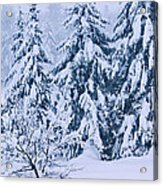 Winter Coat Acrylic Print by Aimelle