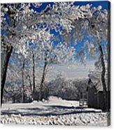 Winter Morning Acrylic Print by Lois Bryan