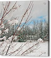 Winter Woods Acrylic Print by Joann Vitali