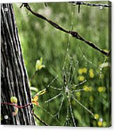 Wired Acrylic Print by JC Findley