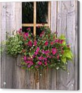 Wooden Shed With A Flower Box Under The Acrylic Print by Michael Interisano