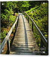 Wooden Walkway Through Forest Acrylic Print by Elena Elisseeva