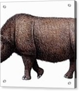 Woolly Rhinoceros, Artwork Acrylic Print by Mauricio Anton