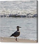 Wounded Seagull 3 Hurt Standing On One Leg Beach Photograph Art Seascape Bird Birds Beaches Sea Pics Acrylic Print by Pictures HDR