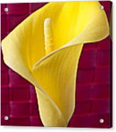 Yellow Calla Lily Red Mat Acrylic Print by Garry Gay
