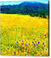 Yellow Hills . Long Cut Acrylic Print by Wingsdomain Art and Photography