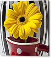 Yellow Mum In Pitcher  Acrylic Print by Garry Gay