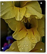 Yellow Trio Acrylic Print by Susan Herber