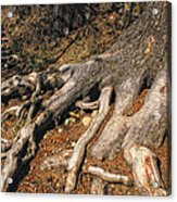 Your Roots Are Showing Acrylic Print by Donna Blackhall