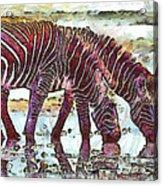 Zebras Acrylic Print by George Rossidis
