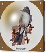 Eastern Kingbird Acrylic Print by Madeline  Allen - SmudgeArt