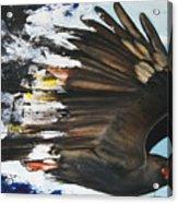 Everglades Snail Kite Acrylic Print by Anthony Burks Sr