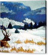 High Country Elk Acrylic Print by Curt Peifley