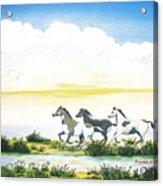 Indian Ponies Acrylic Print by Jerome Stumphauzer