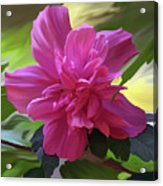 Althea Hibiscus I Acrylic Print by Patricia Griffin Brett