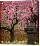 Asian Spring Acrylic Print by Chris Lord