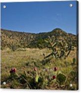 Black Mesa Cacti Acrylic Print by Charles Warren