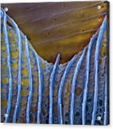 Butterfly Wing Scale Sem Acrylic Print by Eye of Science