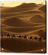 Camel Caravan In The Erg Chebbi Southern Morocco Acrylic Print by Ralph A  Ledergerber-Photography