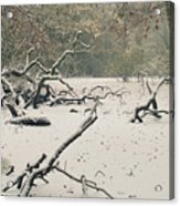 Frozen Fallen Acrylic Print by Andy Smy