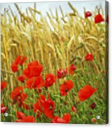 Grain And Poppy Field Acrylic Print by Elena Elisseeva