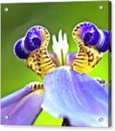 Iris Flower Acrylic Print by Heiko Koehrer-Wagner