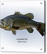 Largemouth Bass Acrylic Print by Ralph Martens