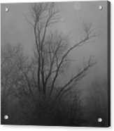 Nebelbild 13 - Fog Image 13 Acrylic Print by Mimulux patricia no