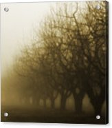 Orchard In Fog Acrylic Print by Rebecca Cozart