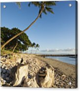 Palm And Driftwood Acrylic Print by Ron Dahlquist - Printscapes