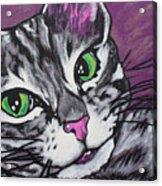 Purple Tabby Acrylic Print by Sarah Crumpler