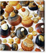 Shell Background Acrylic Print by Carlos Caetano