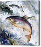 Silver Salmon Acrylic Print by Peggy Wilson