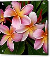Wailua Sweet Love Acrylic Print by Sharon Mau