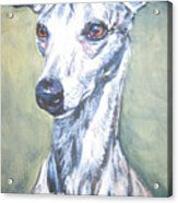 Whippet Acrylic Print by Lee Ann Shepard