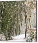 Winter Journey Acrylic Print by Andy Smy