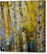 Yellow Aspens Acrylic Print by Marilyn Sholin