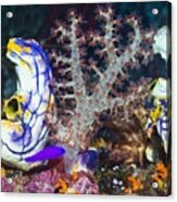 Sea Squirts Acrylic Print by Georgette Douwma