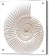 Ammonite Acrylic Print by Gavin Kingcome