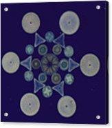 Diatom Arrangement Acrylic Print by M. I. Walker